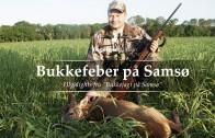 Bukkejagt på Samsø – Kort version